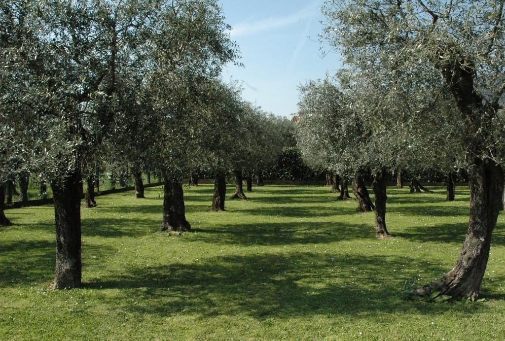 Davines_A-presidio-della-Bellezza-Sostenibile_Olivo-quercetano
