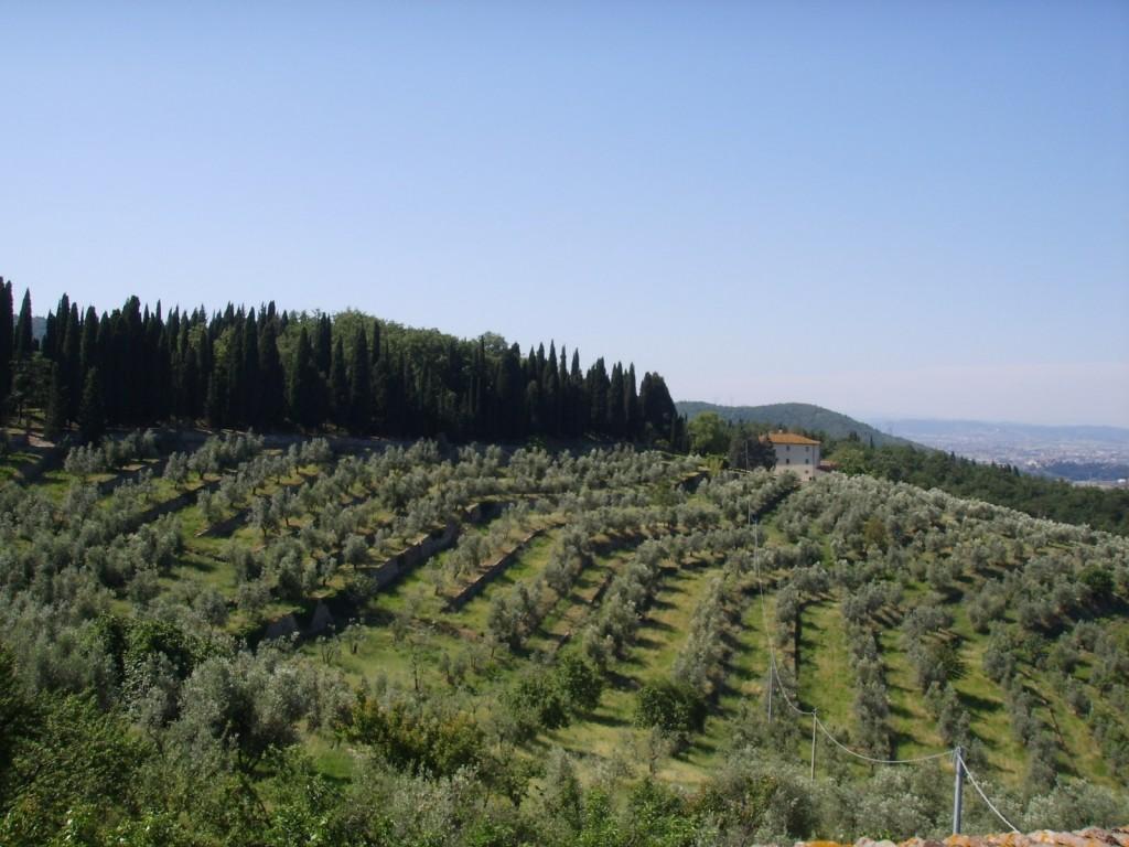 oliveto-toscana